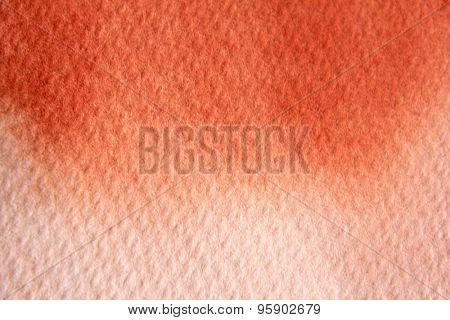 Macro Burnt Orange Watercolor 1