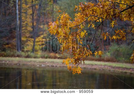 Foliages And Pond 013
