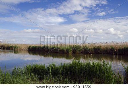 Landscape Of The Camargue