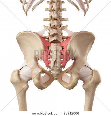 medical accurate illustration of the sacroiliac ligament