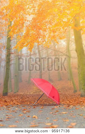 Red Umbrella In Autumn Park On Leaves Carpet.
