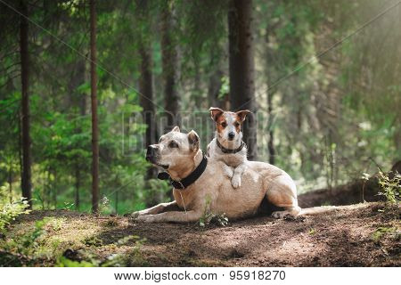 Friendship. Dogs In The Forest