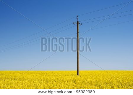 Electric pole in the field. Blooming rape on a sunny day