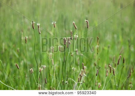 Summer green grass for background