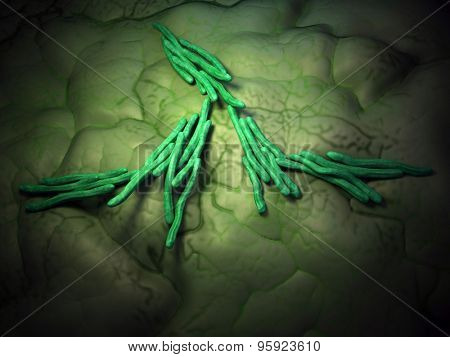 medical bacteria illustration of the mycobacterium tuberculosis
