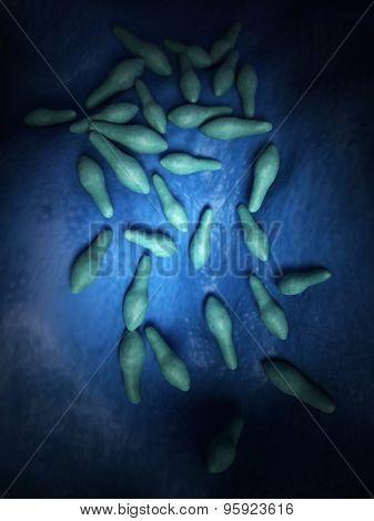 medical bacteria illustration of the clostridium