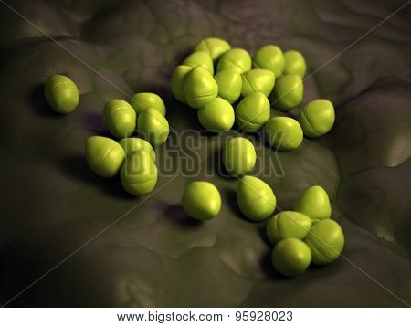 medical bacteria illustration of the enterococcus