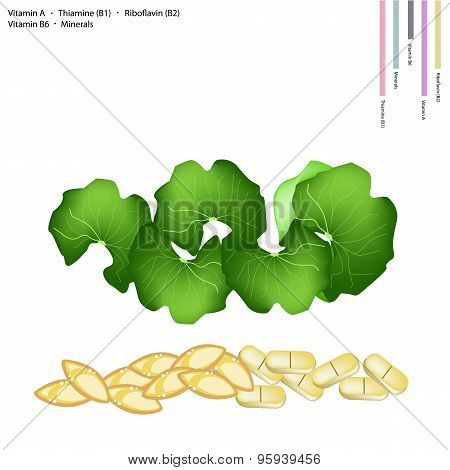 Gotu Kola Leaves with Vitamin A, B1, B2 and B6