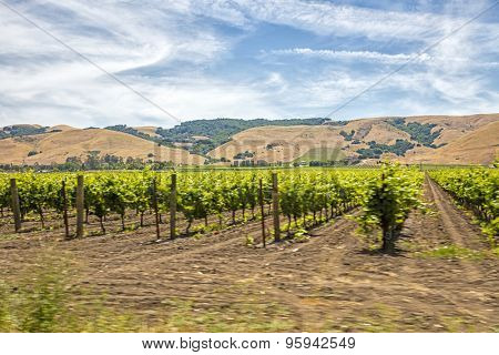 Motion blur moving past Californian vineyard and rows of vines