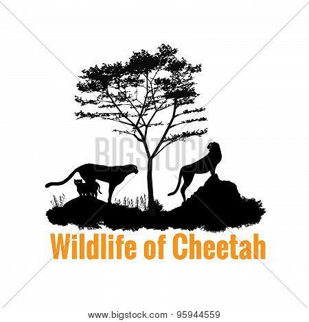 Wildlife of Cheetah black shadow vector design