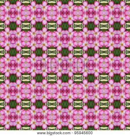 Bouquet Of Pink Adenium Flowers Seamless