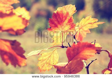 Red And Yellow Leaves In Autumn Forest