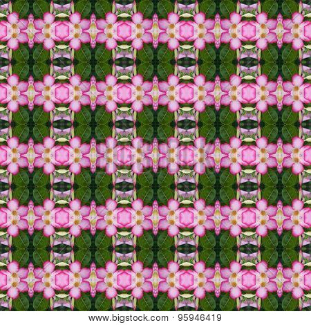 Pink Adenium Flowers Seamless