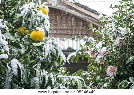 Citrus and flower with snowfall