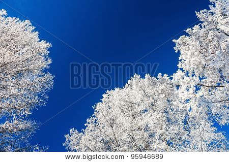 Winter Forest With Snow-covered Trees.