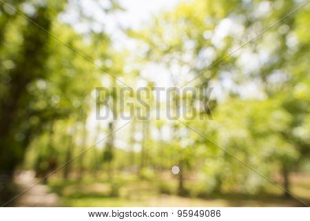 Abstract forest out of focus, natural bokeh background.