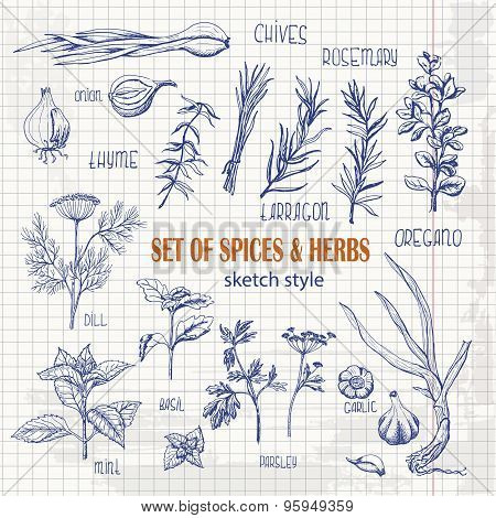 Set of Herbs and spices in sketch style on paper