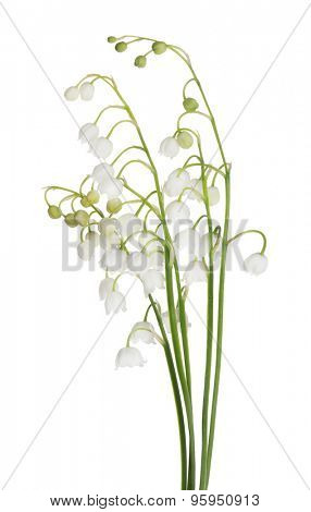 lily-of-the-valley flowers isolated on white background