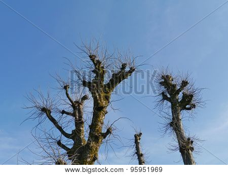 Barren trees during wintertime
