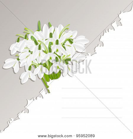 Vector template with snowdrop flowers