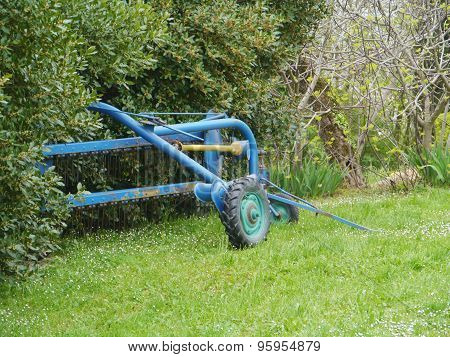 A blue harrow in the bushes