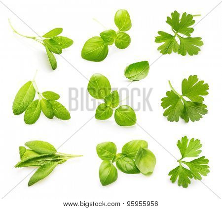 Fresh sage, Parsley herb, basil leaves isolated on white background.