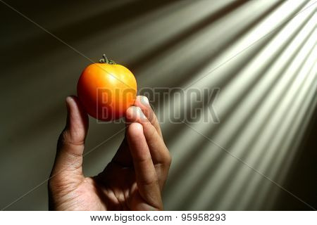 Hand holding a tomato