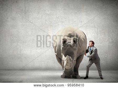 Businessman making effort to move big rhino