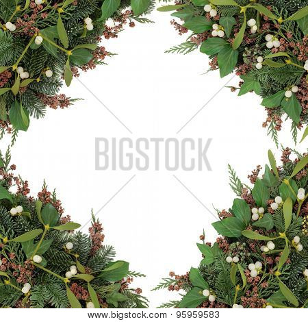 Mistletoe background border with winter greenery of ivy, blue spruce and cedar cypress leyland leaves with pine cones over white.