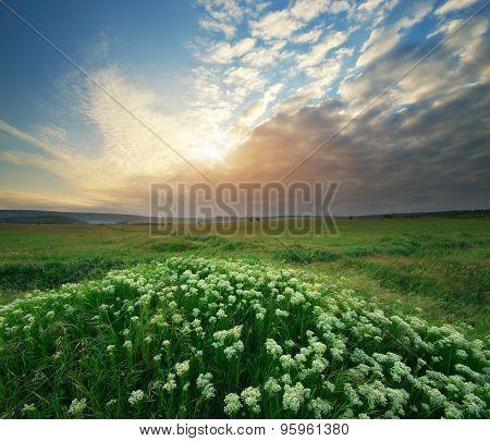 Spring flower in green meadow. Beautiful landscape.