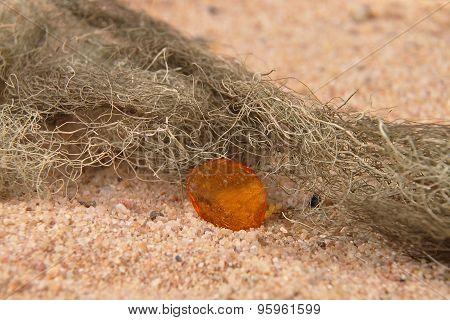 Amber On Beach