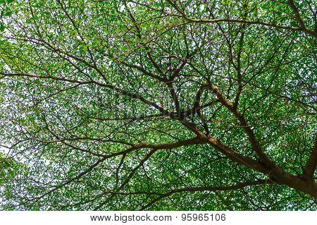 Many Branches Of Leaf