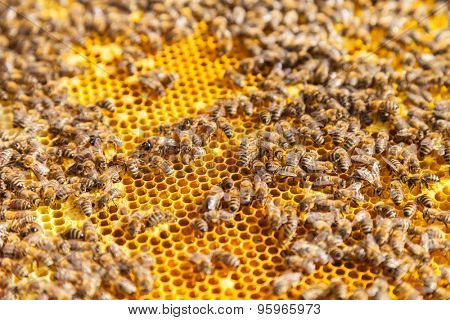 Detail af bees swarm working on honeycomb