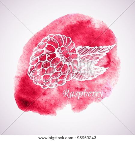 Hand-drawn Vector Illustration. Abstract Watercolor Background With Raspberry. Vintage