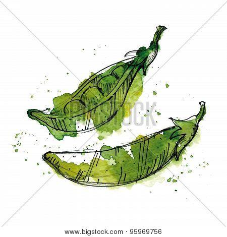Watercolor Illustration Of Peas