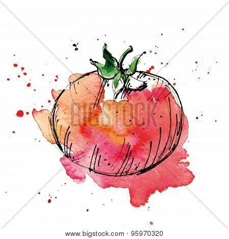 Watercolor Illustration Of Tomato