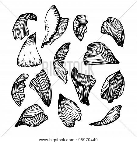 Hand Drawn Vector Illustration - Collection Of Rose Petals.