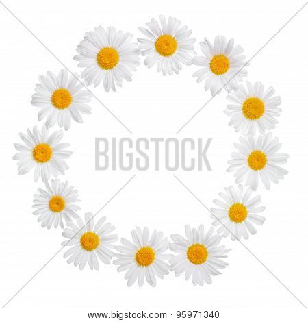 Chamomile Flower Wreath With Place For Your Text Or Image Is Isolated On White, Card For Summer Or W