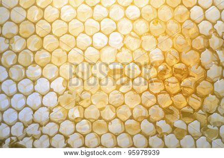 Honeycomb With Honey Inside