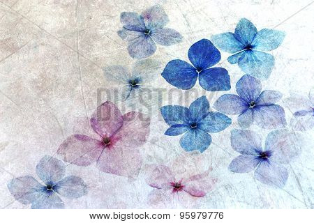 Hydrangea petals with texture overlay