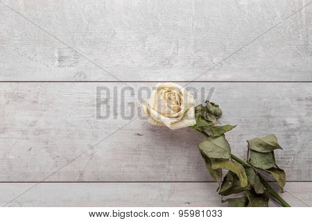 Beautiful dried rose on wooden background.