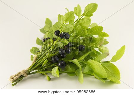 Sprigs Of Blueberries