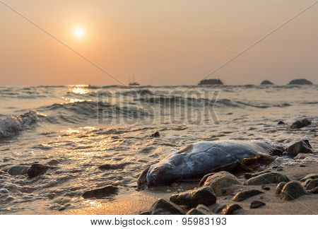 dead fish against sunset at the coast of Koh Chang island, Thailand