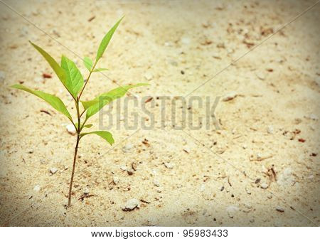 Plant growing through pavement
