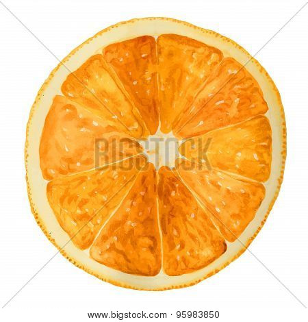 Half Orange Hand Drawn. Watercolor Vector Illustration.