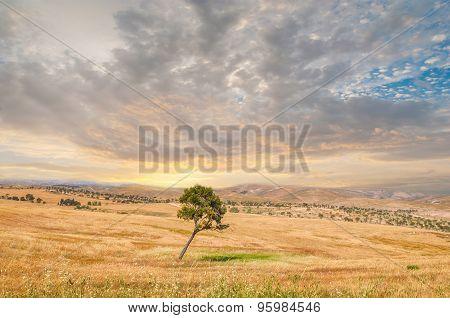 Lonely Tree, Negev Desert
