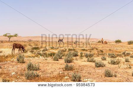 Desert Landscape In Israel's Negev Desert