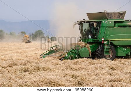 Ryegrass Harvest