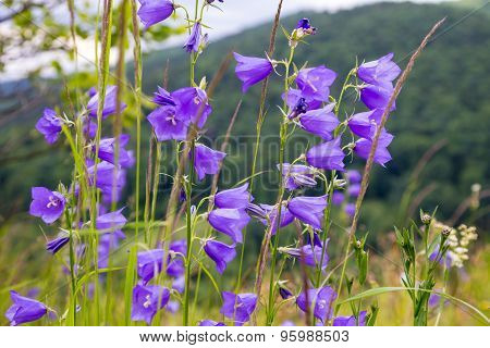 floral background with bluebells