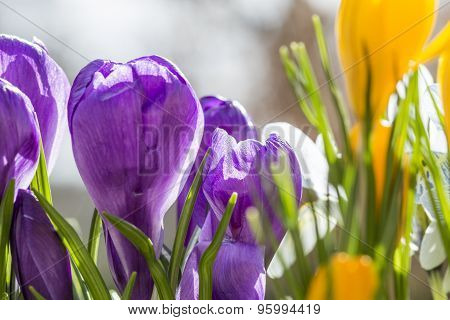 Colorful Display Of Spring Flowers